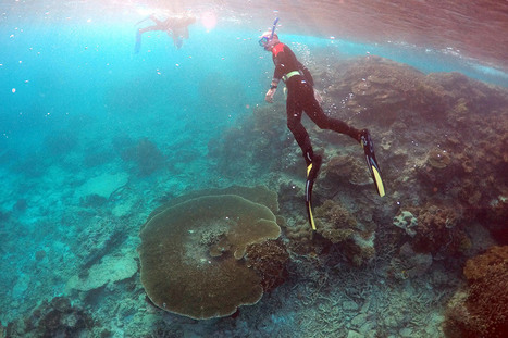 Australia Will Spend $739 Million to Help Protect Great Barrier Reef | All about water, the oceans, environmental issues | Scoop.it