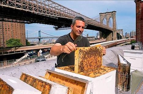 New York : sur les toits, la vie au-dessus de la ville   Urbanisme   Scoop.it