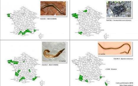 Wanted! Recherche de vers plats | Les colocs du jardin | Scoop.it