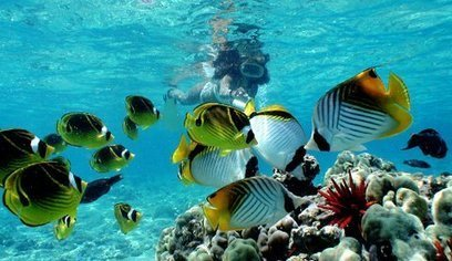Top 5 Snorkeling Spots for Hawaii Vacations | Patton Good Vacation Spots | Scoop.it