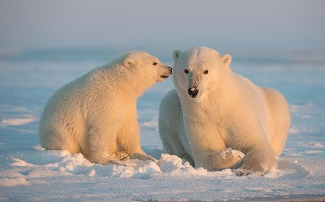 IPCC report: impact of global warming by region - Telegraph | Trends in Sustainability | Scoop.it