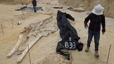 Desert whale graveyard mystery solved | All about water, the oceans, environmental issues | Scoop.it