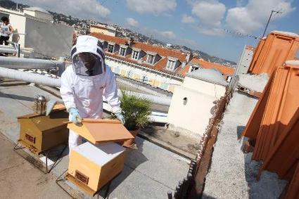 A Nice, les abeilles font le buzz | Media | Scoop.it