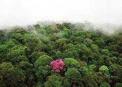 La Forêt tunisienne à l'ère de l'éco-tourisme et de l'économie verte | Directinfo | territoire et développement durable | Scoop.it
