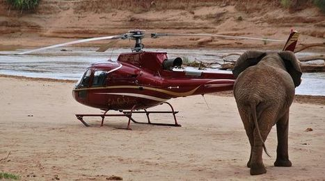Au Kenya, Google et sa technologie au secours des éléphants | Nature Animals humankind | Scoop.it