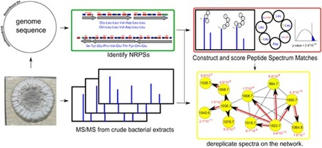 NRPquest: Coupling Mass Spectrometry and Genome Mining for Nonribosomal Peptide Discovery | Marine Natural Products | Scoop.it