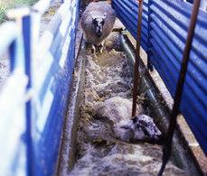 Exposure to organophosphates harm memory, say scientists - 12/3/2012 - Farmers Weekly | The Barley Mow | Scoop.it