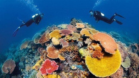 Government spent at least $400000 lobbying against Great Barrier Reef 'danger ... - Sydney Morning Herald | The Great Barrier Reef | Scoop.it