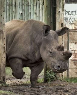2 suspected rhino poachers shot dead in Kruger Park - News24 | Save our Rhino and all animals...this is what it looks like!!!!! | Scoop.it