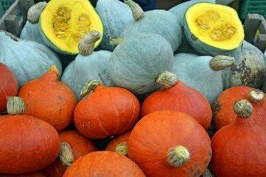 A financer: le sauvetage de notre biodiversité alimentaire | Chimie verte et agroécologie | Scoop.it