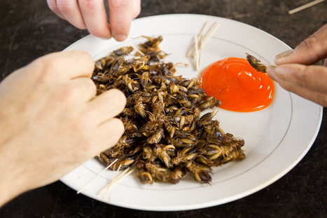 Vente d'insectes : une future success story | Entomophagy: Edible Insects and the Future of Food | Scoop.it