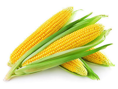 Brazil expected to start exporting maize to China in 2014 | MAIZE | Scoop.it