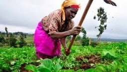 Are African farmers in danger of becoming slaves to patented seeds? - Genetic Literacy Project | Research Capacity-Building in Africa | Scoop.it