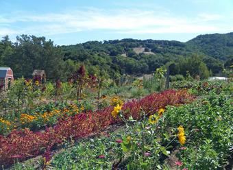 Master Gardeners: Indian Valley Organic Farm a good place for soil, produce and farmers - Marin Independent Journal | Organic Farming | Scoop.it