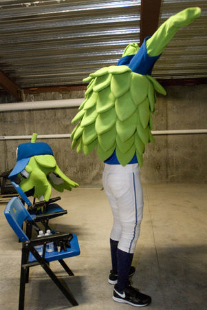 The man behind the leaves, a day in the life of Hillsboro Hops' mascot, 'Barley' | New At Alinco | Scoop.it