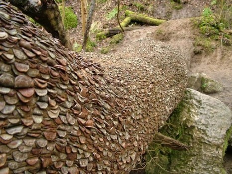 Mysterious Coin Covered Wishing Trees In The UK | Nature and Travel | Scoop.it