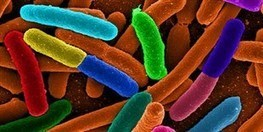 Microbiome Influences | The Scientist Magazine® | Microbiome | Scoop.it