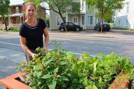 Des potagers libre-service en attendant le jardin communautaire | (Culture)s (Urbaine)s | Scoop.it