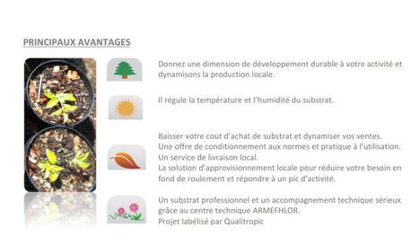 """Innovation: Des """"copofibres"""" pour faire pousser les plantes péi   Innovations, Marketing and Tourism   Scoop.it"""