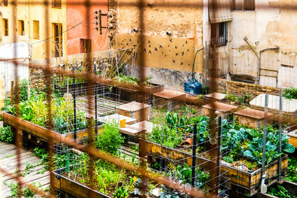 5 Places Where Urban Ag is Happenin' | sustainablity | Scoop.it