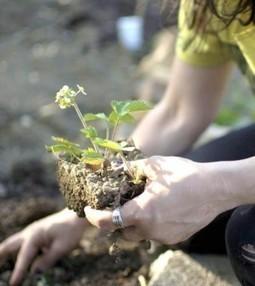 6 ragioni per iniziare a fare giardinaggio con i vostri bambini ... | Coltivare l'orto | Scoop.it
