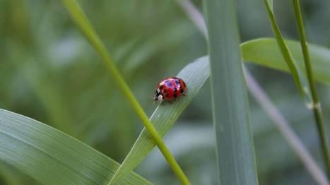 Ne plus forcément se focaliser sur les espèces rares et menacés pour protéger la nature | Biodiversité | Scoop.it