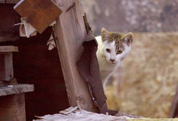 Study shows more communities support humane treatment of feral cats | Pet News | Scoop.it