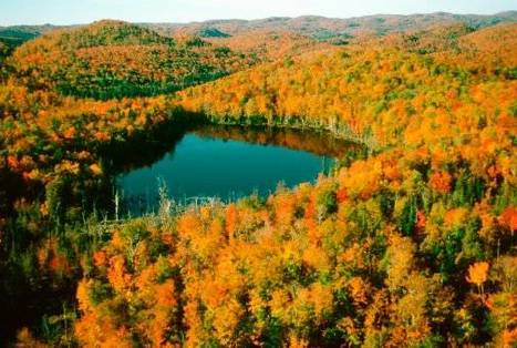Fall Colours: Why Summer's Weird Weather has Affected the Leaves | 100 Acre Wood | Scoop.it