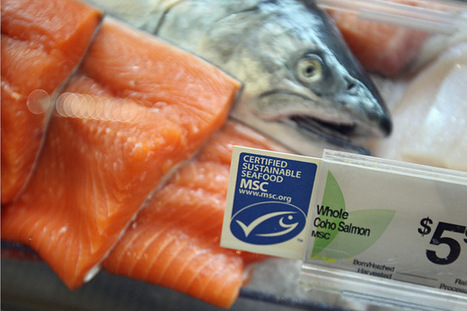 Can You Trust a 'Certified Sustainable' Seafood Label? | Foodfighters | Scoop.it