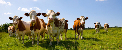 If You Want Healthy Cows, Feed Them Magnets | enjoy yourself | Scoop.it