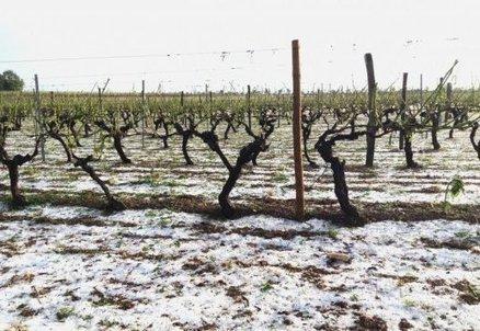 Orages: 10% du vignoble charentais ravagé par la grêle [Vidéo] | Actualités du Cognac | Scoop.it