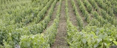 Vins du Jura : palmarès des concours   Le vin quotidien   Scoop.it