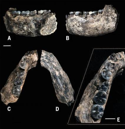 Earliest known fossil of the genus Homo dates to 2.8 to 2.75 million years ago   Philosophy history and psychology   Scoop.it