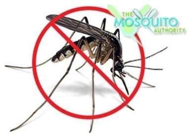 Beach Mosquito Control to spray tonight - The News Herald | Building Mosquito Barrier For My Family's Safety | Scoop.it