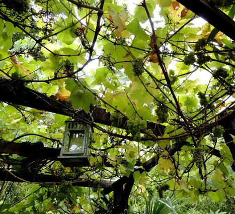 Alternative Eden Exotic Garden: Hosting Danger Garden | ExoticGardening | Scoop.it