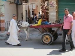 Important Customs to Know When Visiting Egypt | Indigo Scuba | Indigo Scuba | Scoop.it