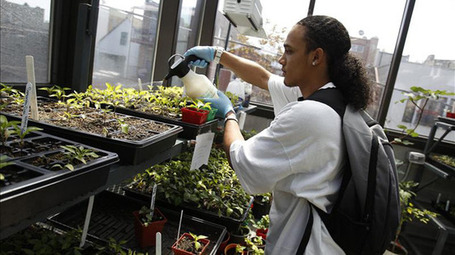 Urban Farming Improves Nutrition in Chicago Neighborhood | Vertical Farm - Food Factory | Scoop.it