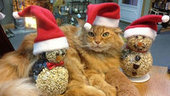 Big orange tabby cat is 'boss' at Peninsula wild bird store - KING5.com (blog) | Ask The Cat Doctor | Scoop.it
