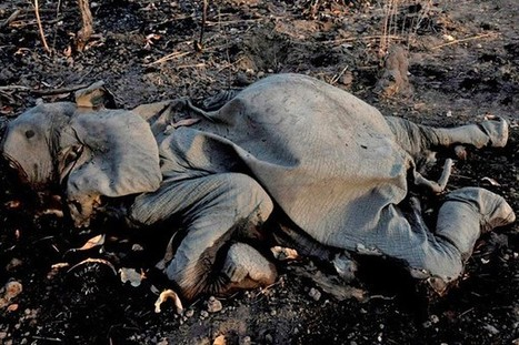 Illegal Wildlife Trade: A Pitiful State | The Wild Planet | Scoop.it