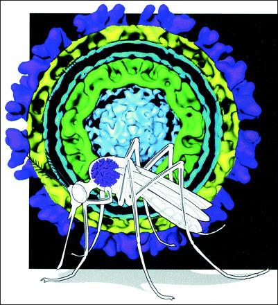 Diez preguntas sobre el virus Zika | microBIO | Scoop.it
