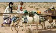 Great Green Wall to stop Sahel desertification | Agriculture, Climate & Food security | Scoop.it