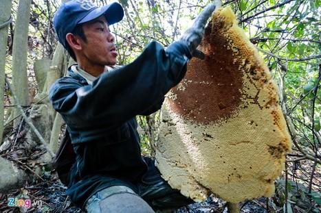 Mật ong là gì ? Cách nhận biết mật ong rừng và mật ong nuôi   Công ty thiết kế web chuyên nghiệp nhất hiện nay   Scoop.it