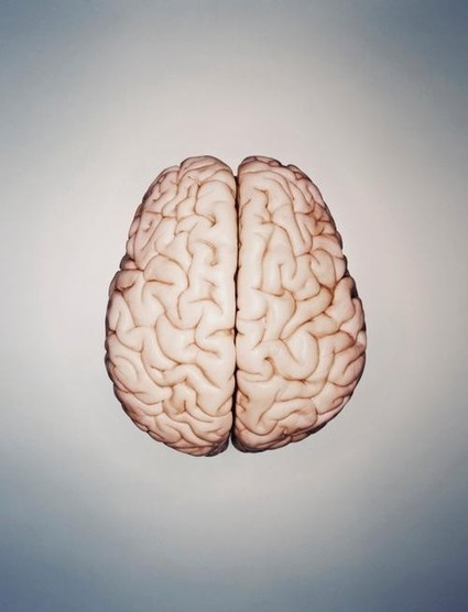 5 Brain Myths That Won't Go Away, Getting Facts in 2014 | Change Leadership Watch | Scoop.it
