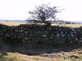 Roman fort targeted by thieves | Histoire et archéologie des Celtes, Germains et peuples du Nord | Scoop.it