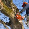Alexander's Tree Service Waldorf