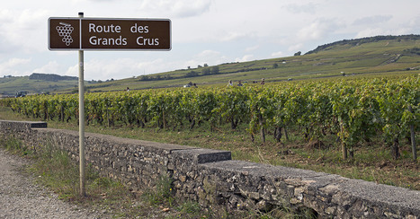 10 Things You Need To Know About #Wine From #Burgundy | Vitabella Wine Daily Gossip | Scoop.it
