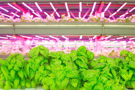 Why Chicago Is Becoming The Country's Urban Farming Capital | Vertical Farm - Food Factory | Scoop.it