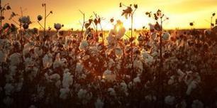 Bénin: consolider et développer la filière du coton | Questions de développement ... | Scoop.it