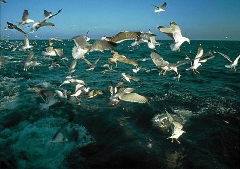 España ampliará las áreas marinas protegidas del 1 al 8 por ciento | Los sistemas fluidos externos y su dinámica. | Scoop.it