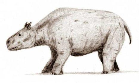 Λύθηκε το μυστήριο των «πιο παράξενων ζώων του κόσμου» | Η Βιολογία στην Εκπαίδευση | Scoop.it